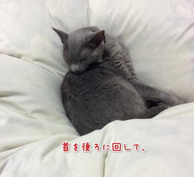 Image_13